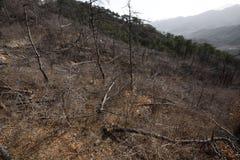 死的森林 库存照片