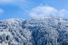 冻结的森林 免版税图库摄影