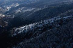 冻结的森林 库存照片
