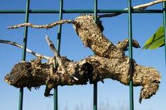 死的植物容忍 免版税库存照片