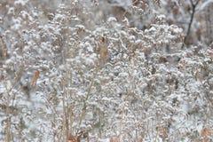 冻结的植物背景 免版税库存图片
