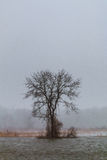 冻结的河季节结构树冬天 库存图片