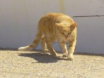 他的注视猫的仔细的思考 免版税图库摄影