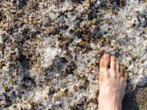 死的海沙盐 库存照片