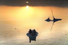 死的海盐词根在黎明 免版税库存图片