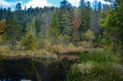 死的湖在森林里,喀尔巴阡山脉, Skole, Uktaine 免版税库存图片