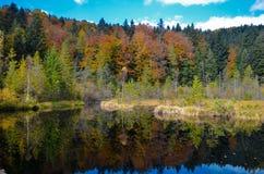 死的湖在森林里, Ð ¡ arpathian山, Skole, Uktaine 图库摄影