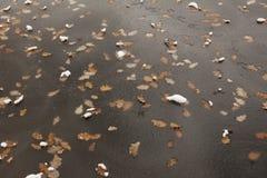 冻结的湖表面 在冰下的叶子 库存图片