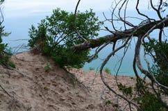 死的漂泊木头树 库存照片
