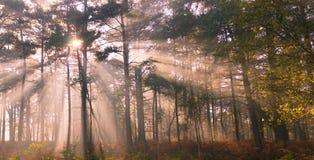 轻的爆炸在森林里 免版税库存图片