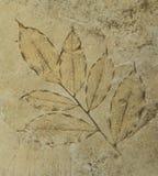 的版本记录在水泥的叶子难倒 库存照片