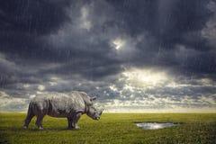 渴的犀牛 免版税图库摄影