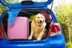 继续的狗和行李旅行 免版税库存图片