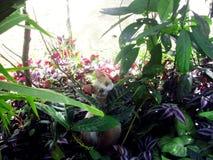 轻的猫看见照相机 免版税库存图片