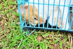 死的猫 免版税库存图片