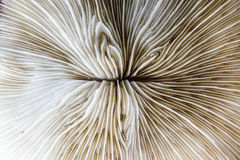 死的珊瑚的Abstarct样式 免版税图库摄影