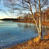 冻结的秋天第2 图库摄影