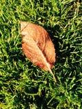 冻结的秋天 库存照片