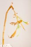 死的竹植物 库存照片