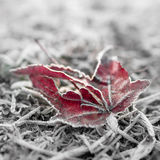 冻结的红色叶子和bokeh 图库摄影