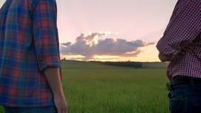 的老父亲站立与成人儿子和观看的日落的后面观点在麦子或黑麦领域,美好的自然上 股票视频