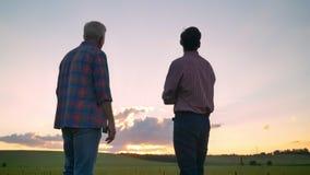 的老父亲站立与成人儿子和观看的美好的日落一起的后面观点 影视素材