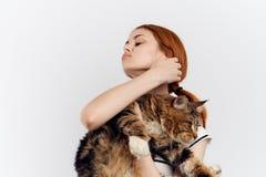 轻的背景的美丽的少妇拿着一只猫,过敏 图库摄影