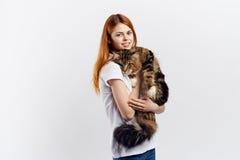 轻的背景的美丽的少妇拿着一只猫,过敏 库存照片