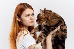 轻的背景的年轻美丽的妇女拿着一只猫,缅因浣熊 库存图片