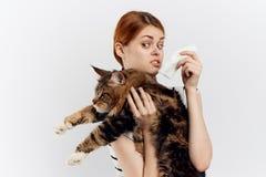 轻的背景的年轻美丽的妇女拿着一只猫,过敏 库存照片