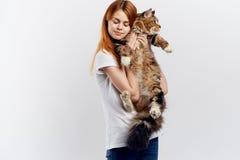 轻的背景的年轻美丽的妇女拿着一只猫,过敏 库存图片