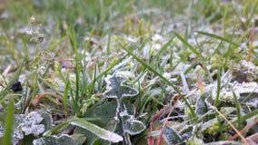 冻结的自然 库存图片