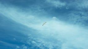 的自由能飞行 图库摄影