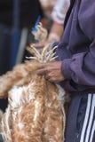 死的花梢矮小的鸡在Otavalo动物市场上 免版税库存图片