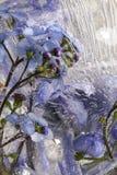 冻结的花 库存照片