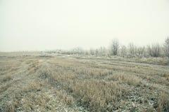 冻结的草和地面在冬天领域 免版税库存图片