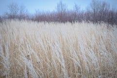 冻结的草和地面霜在冬天背景中 图库摄影