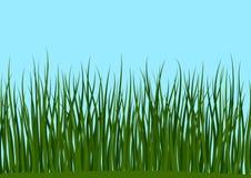 的草和无缝的蓝天 库存图片