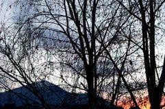 冻结的草横向日落水冬天 库存照片