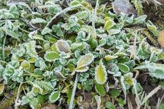 冻结的草背景和纹理 免版税库存照片
