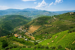 的葡萄园小山 杜罗河谷的全景 库存照片