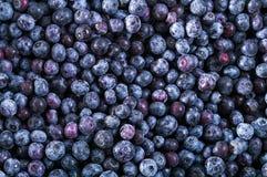 冻结的蓝莓纹理-背景 免版税库存照片