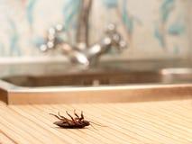 死的蟑螂在厨房里 库存图片