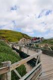 去的访客拜访非洲企鹅殖民地 免版税库存图片