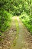 轻的足迹在森林里 库存照片
