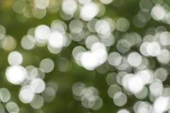轻的迷离在森林里 免版税库存照片