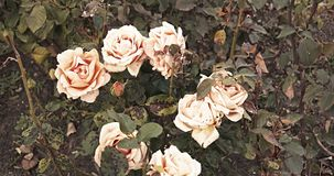 死的铜花在被定调子的秋天庭院里上升了 股票录像