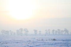 冻结的领域早晨 图库摄影