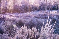 冻结的风景12月 免版税库存图片