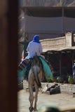 他的骆驼的流浪者,蓝色孔,宰海卜 免版税库存照片